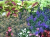 flowers-021