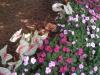 flowers-033