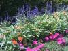 flowers-037