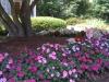 flowers-040