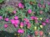 flowers-044