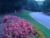 flowers-058