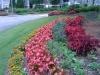 flowers-059