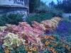flowers-071