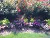 flowers-080