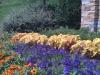 flowers-086