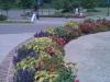flowers-087