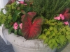 flowers-088