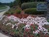 flowers-093