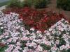 flowers-094