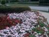 flowers-095