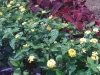 flowers-112