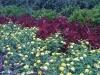 flowers-118