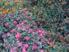 flowers-123