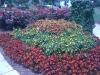 flowers-126