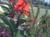 flowers-128
