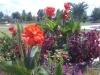 flowers-129