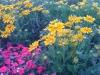 flowers-132