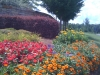flowers-136