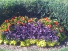 flowers-137