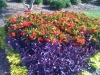 flowers-138