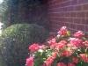 flowers-145