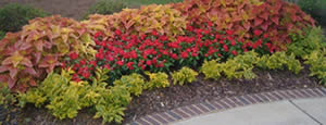 Flowers with Lanscaping Mulch and Edging