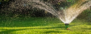 Sprinkler spraying water on a green lawn