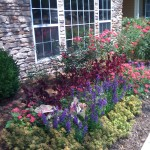 A residential flower bed