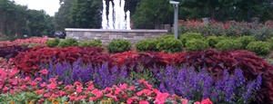 commercial-seasonal-plantings